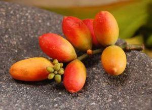 http:banabakery.wordpress.com, melinjo, antioksidan,